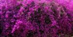 Wallpaper Flowers