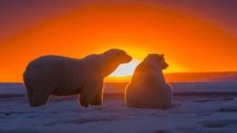 antarctic-polar-bear-snow-ice-red-sky-sunset-3840x2400-915x515