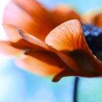 Macro anemone_by_mars_hill-d9ovi8g