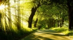 Sunrise-spring-forest-trees-road_1920x1080