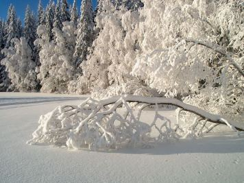 nature pure_snow_by_karil