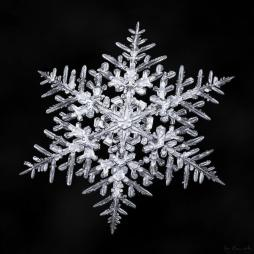 nature Don-Komarechka-flocons-de-neige-macro-20