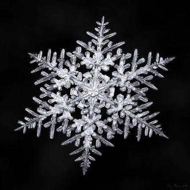 nature Don-Komarechka-flocons-de-neige-macro-20