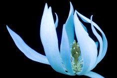 Magnolia-1-s